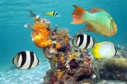 Fische im Korallenriff werden womöglich durch Sonnencremes geschädigt. (Bild: Fotolia)
