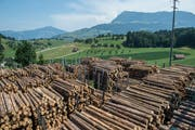 Bei der Schilliger Holz AG in Haltikon stapelt sich das Holz. (Bilder: Dominik Wunderli, Küssnacht, 25. Juli 2019)