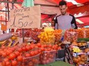 Tomaten so weit das Auge reicht. Bild: Silvia Schaub