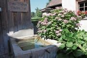 Anstatt Funkien und Hortensien sollen beim Brunnen Felsenbirne, Lerchensporn, Hirschzunge, Salomonssiegel und Gilbweiderich gepflanzt werden.Bild: Susi Miara