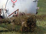 Ausgelaufen statt ausgebracht: Gülle aus einem Schweinestall hat in der Glâne rund 500 Fische getötet. (Bild: KEYSTONE/URS FLUEELER)