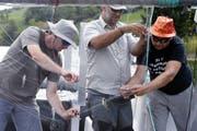 Im August 2018 haben Experten den Ägerisee befischt und die Resultate ausgewertet. (Werner Schelbert, 28.August 2018)
