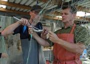 Timon Polli vom Aquabios Projektteam (links) und Gregor Styger, Jagd- und Fischereiaufseher des Kantons Zug beim Vermessen eines Hechtes im August 2018.