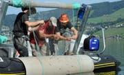 Das Projektteam von Aquabios hebt ein Vertikalnetz und entnimmt ihm verschiedene kleine Fische aus dem Ägerisee. (Bilder: PD)