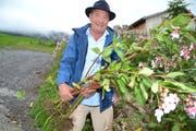 Robert Jörin, LoT-Präsident hat bereits einige Pflanzen des drüsigen Springkrauts mit den Wurzeln ausgerissen. (Bild: Adi Lippuner)