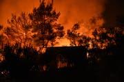 Der grossflächige Waldbrand in Euboa. (Bild: EPA/14. Juli 2019)