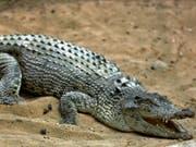 Ein Krokodil hat auf den Philippinen einen zehnjährigen Buben getötet. (Bild: KEYSTONE/AP/EBRAHIM NOROOZI)