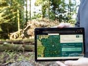 Eine neue App für Forstfachleute zeigt, welche Bäume im Wald auch bei veränderten klimatischen Bedingungen eine Zukunft haben. (Bild: KEYSTONE/ALEXANDRA WEY)