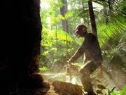 In Brasilien wird verstärkt Amazonas-Regenwald zerstört zugunsten der Agrarindustrie, die neue Flächen für den Anbau von Soja und die Rinderzucht benötigt. (Bild: KEYSTONE/EPA EFE/MARCELO SAYAO)