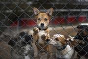 Immer öfter werden Hunde übers Internet gekauft. (Bild: Keystone)