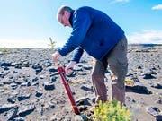 Hreinn Oskarsson, Director beim Icelandic Forest Service, hilft mit, Bäume auf dem Lava-Gelände bei Thorlakshofn zu pflanzen. (Photo by Halldor KOLBEINS / AFP) (Bild: Keystone/AFP/HALLDOR KOLBEINS)