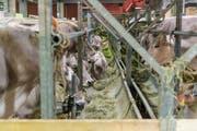 Blick in die landwirtschaftliche Fachmesse Tier & Technik auf dem Olma-Areal. Sie wird jetzt durch den digitalen Treffpunkt Farming.plus ergänzt. (Bild: Hanspeter Schiess - 19. Februar 2015)