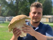 Der Wittenbacher Adrian Schenkel hat diesen enormen Steinpilz im Wallis gefunden. (Bild: zVg)