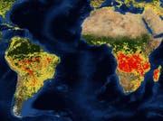 Aufgezeichnete Feuer im Monat August. Je röter, desto häufiger treten Feuer auf. (Bild: nasa/firms)