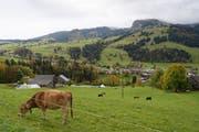 Das Dorf Unterwasser liegt schon dezentral. Da gibt es sogar Kühe. (Bild: KEYSTONE/Gian Ehrenzeller)