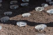 Die sirrenden Muscheln auf dem Erdboden. (Bild: Lisa Jenny)