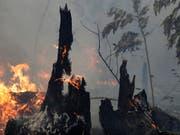 """Die brasilianische Regierung will angesichts der verheerenden Waldbrände im Amazonasgebiet Brandrodungen in der Trockenzeit verbieten. """" (Foto: Eraldo Peres/AP) (Bild: KEYSTONE/AP/ERALDO PERES)"""