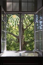 Andy Storcheneggers Installation «The Snake ist often on a Tree» hängt in einer Platane im Stadtpark. (Bild: Adriana Ortiz Cardozo).