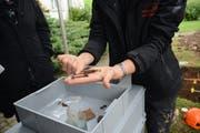 Nebst Knochen wurden auch Glas- und Metallteile wie Sargnägel gefunden.