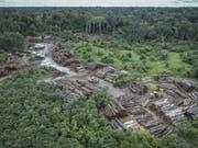 Die Abholzung des Regenwaldes in Brasilien nimmt immer rasanter zu. Im Archiv-Bild eine illegal gerodete Fläche. (Bild: Keystone/AP Ibama/FELIPE WERNECK)