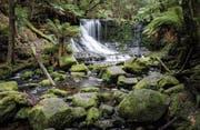 Russell Falls (Quelle: Lohri Reisen)