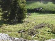 Der Lastwagen überschlug sich mehrmals einen Abhang hinunter, bevor er in einem Maisfeld zum Stillstand kam. (Bild: Kantonspolizei Graubünden)