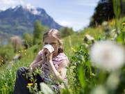 Vor allem die Gräserpollen sorgten in diesem Jahr für allergische Reaktionen wie Heuschnupfen. (Bild: KEYSTONE/GAETAN BALLY)