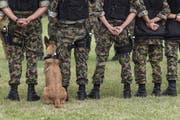 Im Kompetenzzentrum «Veterinärdienst und Armeetiere» werden Hundeführer und Diensthunde ausgebildet. (Bild: Christian Beutler/Key (Schönbühl, 31. August 2018))