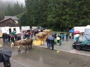 Das Publikum begutachtete die Kühe und Rinder, welche ausgestellt wurden. (Bild: PD)