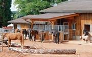 Der erste Aktiv-Stall für Pferde im Kanton Zug: Claudia und Stefan Knüsel pflegen ihre Tiere auf dem Hof Biberlo regelmässig. (Bilder: Stefan Kaiser, Cham, 10. September 2019)