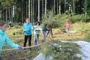 Die Schülerinnen und Schüler sammeln das gemähte Gras mit Heugabeln ein. (Bild: Elena Fasoli)
