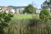 Zwei von ehemals vier Weihern existieren im Areal der Burgweier immer noch. Seinen Namen hat das Areal von der Burg Waldegg (hinten rechts), zu der es einst gehörte. (Bild: Sam Thomas - 24. Oktober 2003)