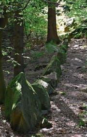 In Reih' und Glied stehen die von Menschenhand angeordneten Steine auf dem Chilchberg. (Bilder: Andreas Faessler, Risch, 12. September 2019)