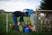 Ein Flüchtling bei der Arbeit auf einem Bauernhof. (Bild: KEYSTONE/Gian Ehrenzeller)