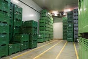 Unspektakulär, aber effektiv: In den Lagerräumen können Äpfel je nach Sorte bis zu einem Jahr aufbewahrt werden. (Bild: Dominik Wunderli, 12. September 2019)