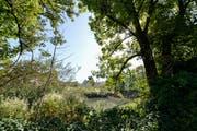 Der obere Burgweier. Im Hintergrund ist knapp die Burg Waldegg zu erkennen, zu der das Areal einst gehörte. (Bild: Hanspeter Schiess - 16. September 2019)