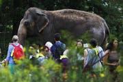 Wir sind eine Bauernfamilie und zumindest ich fühle mich dabei manchmal, als wäre ich der Elefant im Zoo. (Bild: Michele Tantussi/Getty Images)