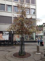 Die Linde vor der Post Brühltor in St.Gallen: Der Baum träge Ende August bereits nur noch braune Blätter. (Bild: Reto Voneschen - 21. August 2019)