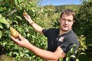 Manuel Strupler inmitten seiner beschädigten Birnen in Weinfelden. (Bild: Mario Testa)