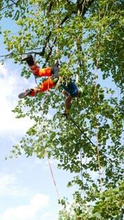 Akrobatik: Weit oben in der Höhe musste die Baumkrone zurückgeschnitten werden.(Bild: PD)