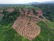 Gerodeter Wald für die Palmöl-Produktion in Indonesien. Der Nationalrat hat das Freihandelsabkommen mit Indonesien genehmigt, das ein Kapitel zur nachhaltigen Produktion enthält. (Bild: KEYSTONE/EPA/HOTLI SIMANJUNTAK)