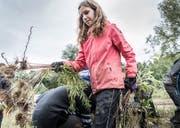 Der Goldrute geht es an den Kragen: Eine Schülerin mit der ausgerissenen Pflanze. (Bild: Andrea Stalder)