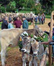 Für die Jubiläumsschau werden sieben Bauern mit etwa 180 Kühen sowie ein Bauer mit rund 20 Schafen erwartet. (Bild: APZ)