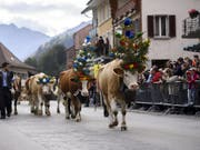 Alpabzug in Charmey: Die Kühe marschieren nach dem Sommer auf der Alp ins Tal zurück. (Bild: KEYSTONE/ANTHONY ANEX)