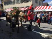 Die Kühe der Familie Emmenegger können sich sehen lassen! (Bild: David von Moos)