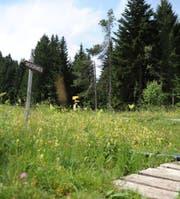 Die schöne Landschaft, die Flora und die Moorwege sind drei Trümpfe, welche die Gäste im Sommer auf die Wolzenalp ziehen. (Bild: Olivia Hug)