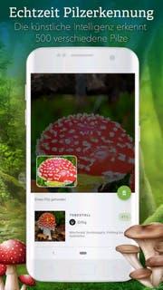 Die App «Pilze 123» hat gegenüber einem Lexikon sogar Vorteile. Bild: zvg