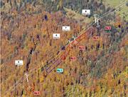 Der Streckenverlauf der Gondelbahn würde gemäss Stettler eine Rodung des Schutzwaldes erfordern. (Visu: René Stettler)
