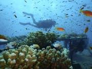 Viele Menschen fliegen ans Rote Meer, um die Korallenriffe zu sehen, bevor sie durch den Klimawandel verschwinden. (Bild: AP)