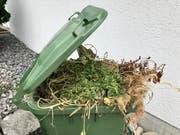 Uzwil verliert seinen Sonderstatus in Sachen Grünabfuhr. Der Kanton zwingt die Gemeinde zur Einführung von kostendeckenden Gebühren nach dem Verursacherprinzip. (Bild: Andrea Häusler)
